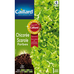 CHICOREE SCAROLE FORBES 36GR