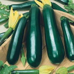 Courgette verte longue