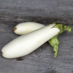 aubergine greffe blanche