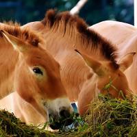 Alimentation chevaux